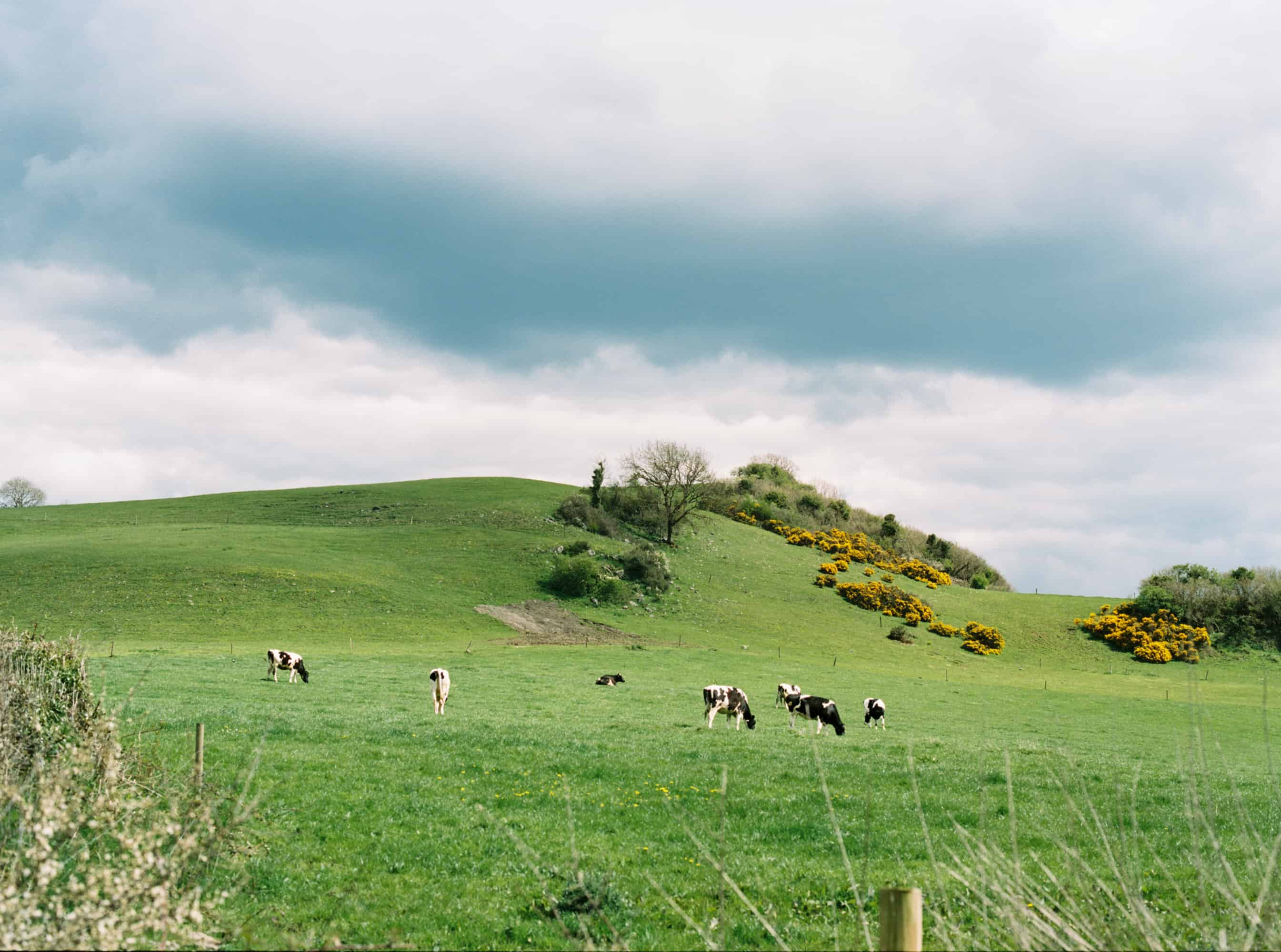 Ireland farmland photographed on film by Kate Lamb of Wild in Love Photo